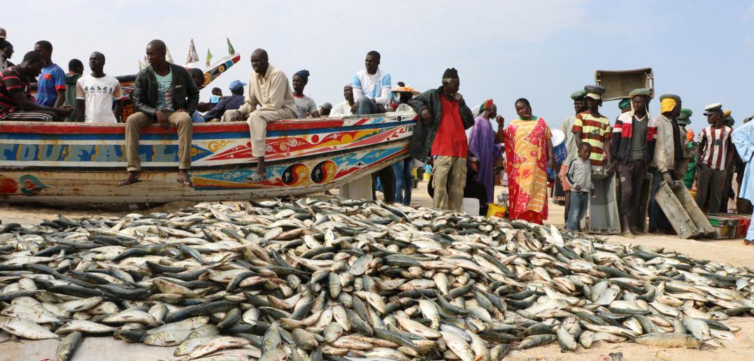 Du poisson débarqué à même le sol, malgré l'interdiction.