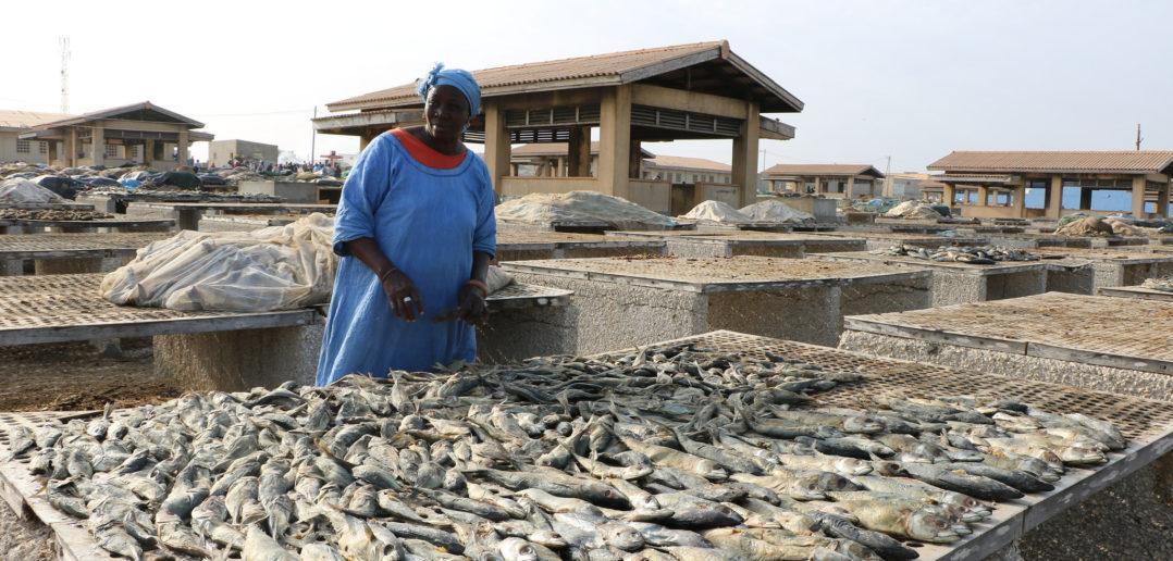 Au site de transformatrice de poisson qui jouxte le quai de pêche de Cayar