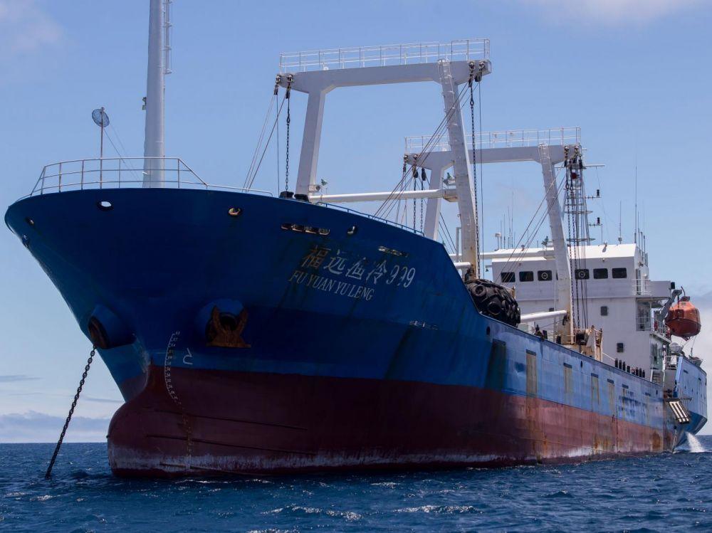 e Fu Yuan Yu Leng 999, arraisonné le 13 août, contenait dans ses cales 300 tonnes de poisson, dont plus de 6.600 requins, notamment des requins marteau, en voie d'extinction, et des requins soyeux.
